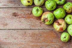 Nya frukter odlade sig royaltyfria foton