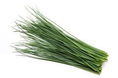 nya gräslökar Arkivfoton