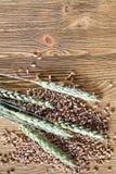 nya gräsplanöron royaltyfria bilder