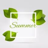 Nya gräsplansidor i en fyrkant Sommar Royaltyfri Bild