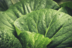 Nya gräsplansidor och grönsaker arkivbild