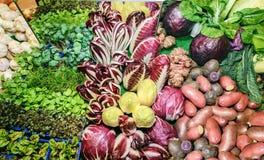 Nya gröna aromatiska örter, rotar, salladfoderbetan, vitlök, kål, löken, röd kål, potatisar, cikoriasallad, radicchiosallad, K Royaltyfri Foto