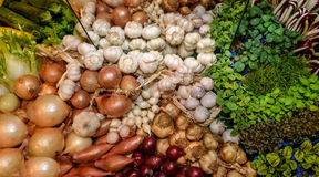 Nya gröna aromatiska örter, vitlök, lök, fänkål, radicchiosallad, fransk endiv Begrepp av sunt äta Royaltyfria Bilder
