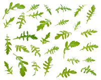 Nya gröna arugulasidor på olika vinklar på den vita backgrouen Royaltyfri Bild