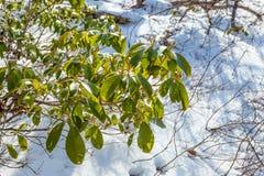 Nya gröna blad och gräsvårtid i skog Royaltyfri Bild