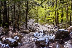 Nya gröna blad och gräsvårtid i skog Arkivfoton