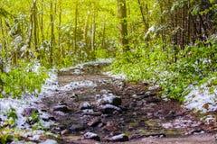 Nya gröna blad och gräsvårtid i skog Arkivfoto