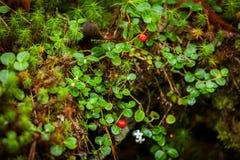 Nya gröna blad och gräsvårtid i skog Arkivbilder