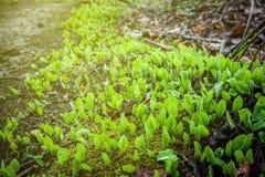 Nya gröna blad och gräsvårtid i skog Royaltyfria Foton
