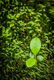 Nya gröna blad och gräsvårtid i skog Royaltyfri Foto