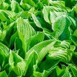 Nya gröna blommasidor Arkivfoto