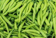 Nya gröna chilies Arkivfoton