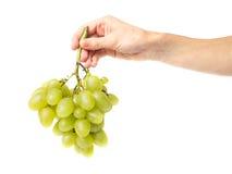 Nya gröna druvor Fotografering för Bildbyråer