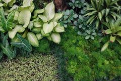 Nya gröna inomhus växter, (bakgrund) Arkivbilder