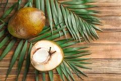 Nya gröna kokosnötter och palmblad Arkivfoton