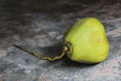 Nya gröna kokosnötter på det konkreta golvet arkivbilder