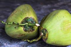 Nya gröna kokosnötter på det konkreta golvet royaltyfria foton