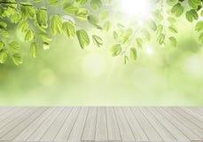 nya gröna leafs Royaltyfri Fotografi