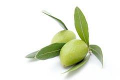 nya gröna olivgrön Royaltyfri Foto