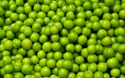 nya gröna organiska plommoner Royaltyfri Fotografi