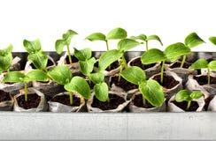 Nya gröna plantor Arkivfoto