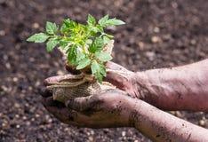 nya gröna plantor arkivbilder