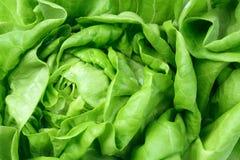 Nya gröna salladgrönsallatLeaves Arkivbild