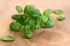 Nya gröna sidor av mintkaramellen Royaltyfri Fotografi