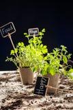 Nya gröna växter och kort Royaltyfri Bild