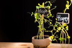 Nya gröna växter och kort Royaltyfri Foto