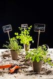 Nya gröna växter och kort Arkivfoto