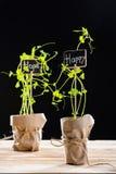 Nya gröna växter och kort Royaltyfria Bilder