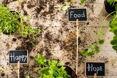 Nya gröna växter och kort Fotografering för Bildbyråer