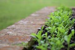 Nya gröna växter som spirar från frö Royaltyfri Foto