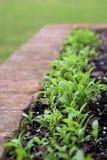 Nya gröna växter som spirar från frö Royaltyfri Fotografi