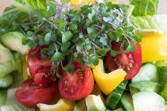 Nya grönkål- och broccolimicrogreens överst av en grönsaksallad Royaltyfri Bild