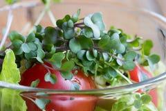 Nya grönkål- och broccolimicrogreens i en grönsaksallad Arkivfoton