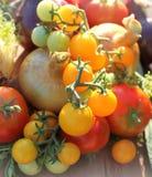 Nya grönsak-lök, tomat och örter Royaltyfri Foto