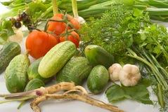 nya grönsaker Royaltyfri Fotografi
