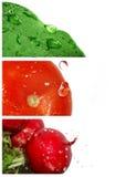 nya grönsaker Royaltyfri Bild