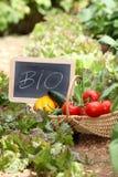 nya grönsaker för korg Arkivfoto