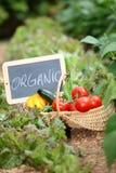 nya grönsaker för korg Royaltyfri Foto