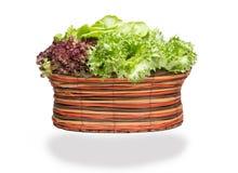 nya grönsaker för korg arkivbild