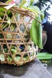 nya grönsaker för unuse i avfallkorg Royaltyfri Foto