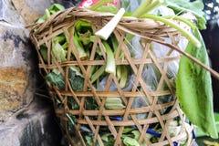 nya grönsaker för unuse i avfallkorg Royaltyfri Bild