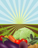 Nya grönsaker från den öppna jordningen Arkivfoton