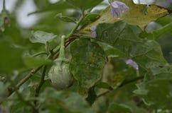 Nya grönsaker i organisk lantgård royaltyfri fotografi
