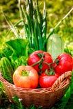 Nya grönsaker i vävd korg arkivfoton