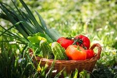 Nya grönsaker i vävd korg royaltyfria foton