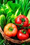 Nya grönsaker i vävd korg arkivbild